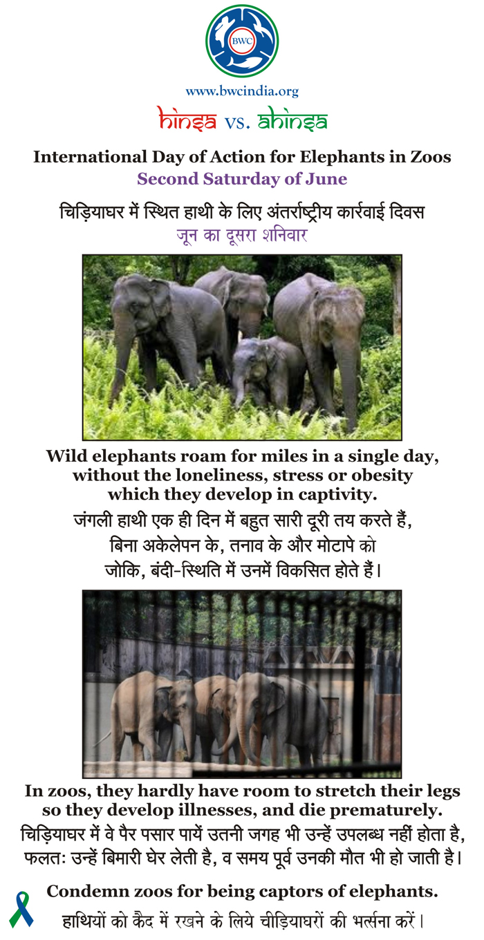 beauty without cruelty india